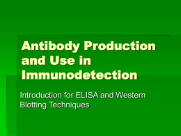 Antibody Production and Use in Immunodetection