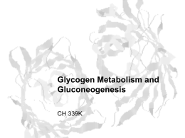 Glycogen Metabolism and Gluconeogenesis
