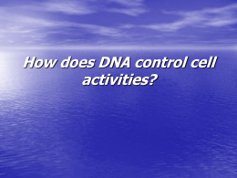 How does DNA control cell activities?