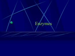 Enzymes - Antelope Valley College