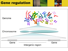 Gene regulation - Sonoma Valley High Home