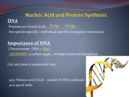 Nucleic Acid and Protein Synthesis