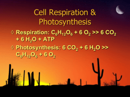 Cell Respiration & Photosynthesis