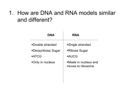 How does DNA store and transmit cell information?