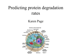 Predicting protein degradation rates