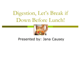 Digestion, Let`s break it down for lunch! Causey