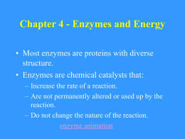 Chapter 4 Enzymes and Energy