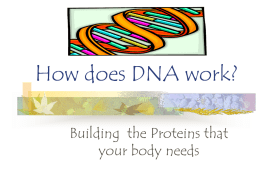 How does DNA work
