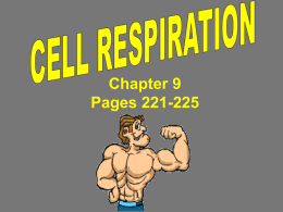 Cell Boundaries Chapter 7.3