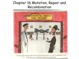 Mutation, repair, and recombination