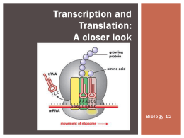 A closer look at Transcription and Translation