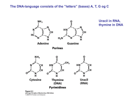 (DNA) and ribose (RNA)