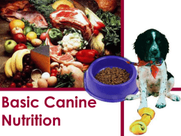 Basic Canine Nutrition