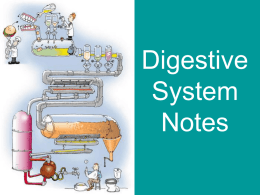 Introduction to the Digestive System Notes