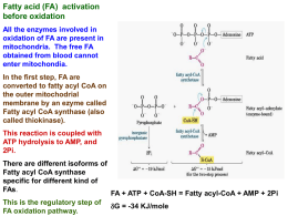 Peroxisomal oxidation of fatty acids
