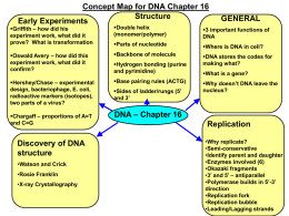 DNA and Protein Synthesis Organizer