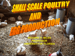 Small Scale Poultry & Egg Production