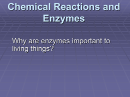 2–4 Chemical Reactions and Enzymes