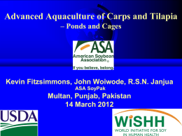 Carp and tilapia in ponds