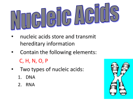 NOTES: Nucleic Acids