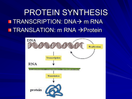 student notes protein synthesis mutation