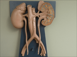 URINARY_SYSTEM_jh