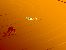 Muscles - science-teachers