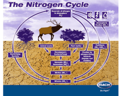 Nitrogen Cycle Power Point