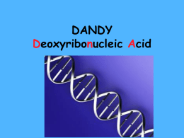 DANDY Deoxyribonucleic Acid