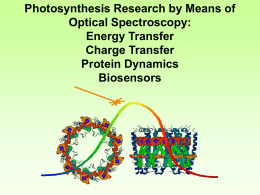 Photosynthesis Research by Means of Optical Spectroscopy: Energy