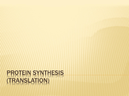 Protein Synthesis (Translation)