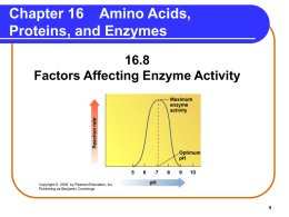 Amino Acids, Proteins, and Enzymes