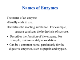Chapter 20 Enzymes and Vitamins