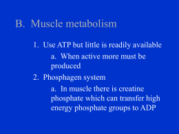 B. Muscle metabolism - Crestwood Local Schools