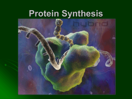 PP-Protein Synthesis