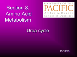 AA lecture 2 urea cycle