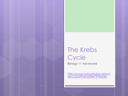 The Kreb`s Cycle