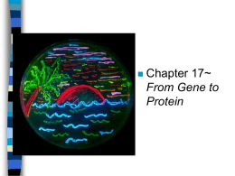 From Gene to Protein Protein Synthesis