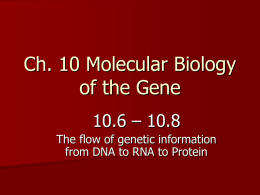 PowerPoint Presentation - Ch. 10 Molecular Biology of the Gene