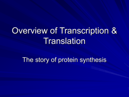 Overview of Transcription & Translation