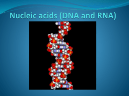 02 DNA and RNA and protein synthesis