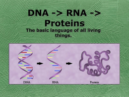 110661_Protein_synthesis.ppt