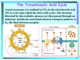 The Tricarboxylic Acid Cycle Acetyl-coenzyme A is oxidized to CO 2