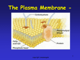 Plasma Membrane - Phoenix Union High School District