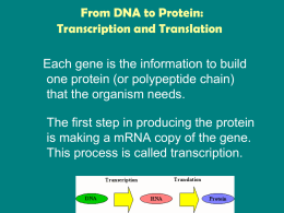 From DNA to Protein: Transcription and Translation