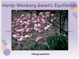 Hardy-Weinberg Genetic Equilibrium