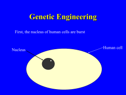 Genetic Engineering Ppt