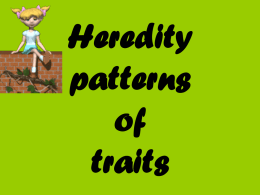 Heredity patterns of traits - WidgetsandWhatchamacallits