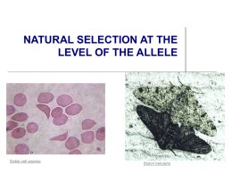 Natural Selection and Alleles