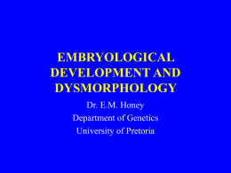 embryological development and dysmorphology